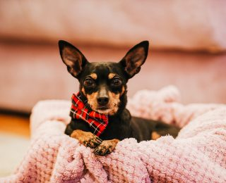 pet care & supplies eCommerce